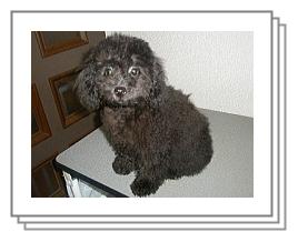 p_puppy_110623_1.jpg