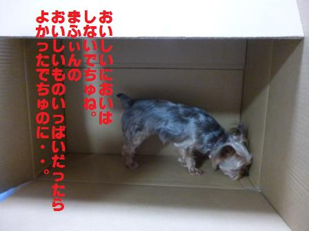 P1010746.jpg