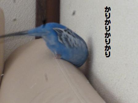 P1020203.jpg
