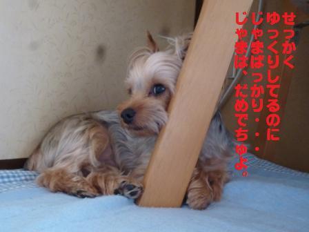 P1020212.jpg