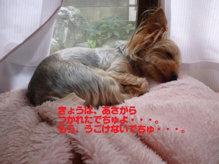 P1020570.jpg