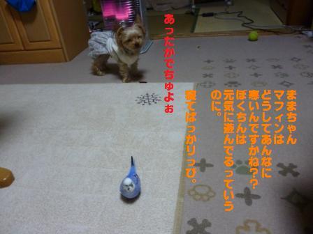 P1020841.jpg