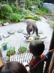 お庭を観察