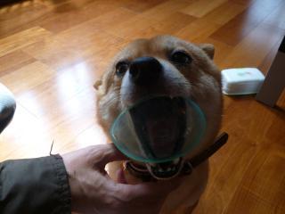 カップ犬2