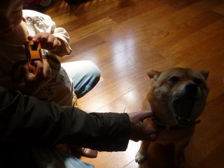 カップ犬3