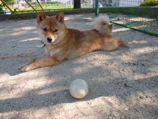 ボールいいや。
