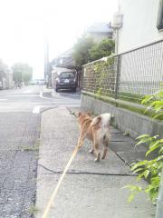 出産日の散歩