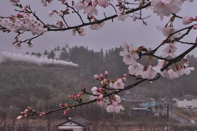 20130330sakura2.jpg
