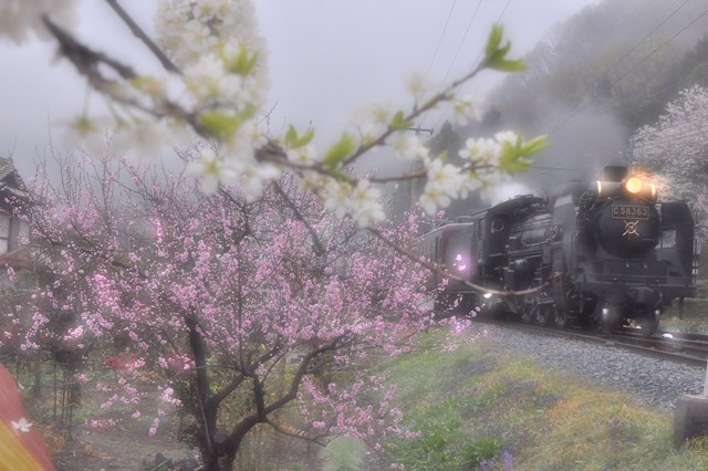 20130330sakura4.jpg