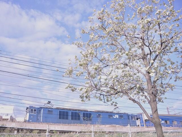 20130413am-akebonomizuki.jpg
