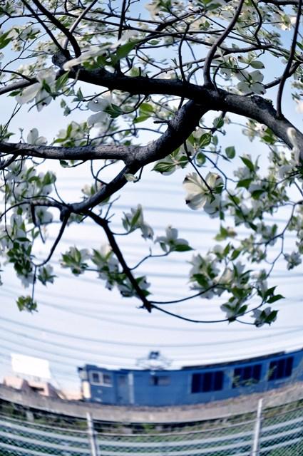 20130414akebono-mizuki2.jpg