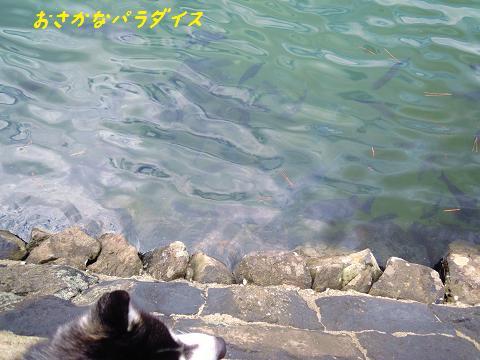 DSCN9873y_20120924010048.jpg