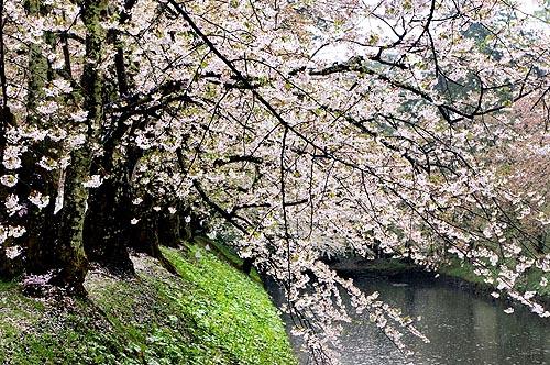 hirosaki_3.jpg