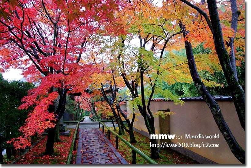 kyoto_au03.jpg