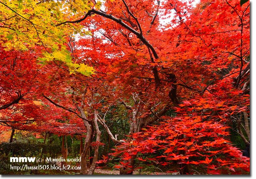 kyoto_au17.jpg