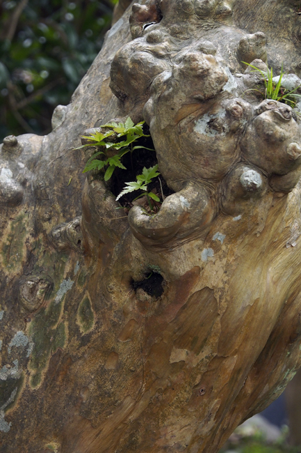20・自然盆栽