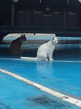 白い猫img