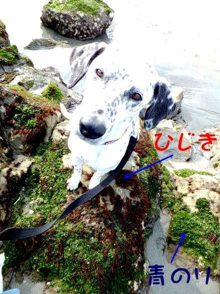 blog_0201_134528.jpg