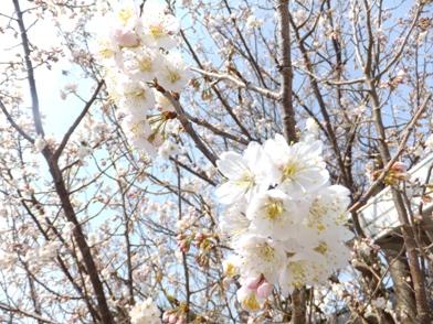 blog_0309_142928.jpg