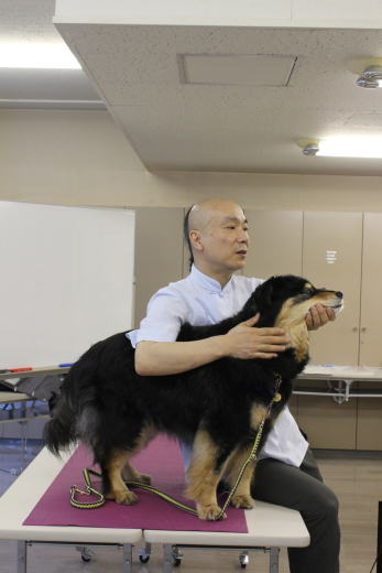 デモ犬Hanaさん