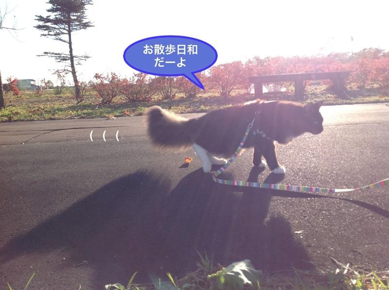 image_20121030162344.jpg