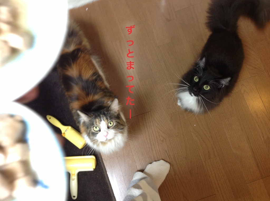 image_20121130202453.jpg