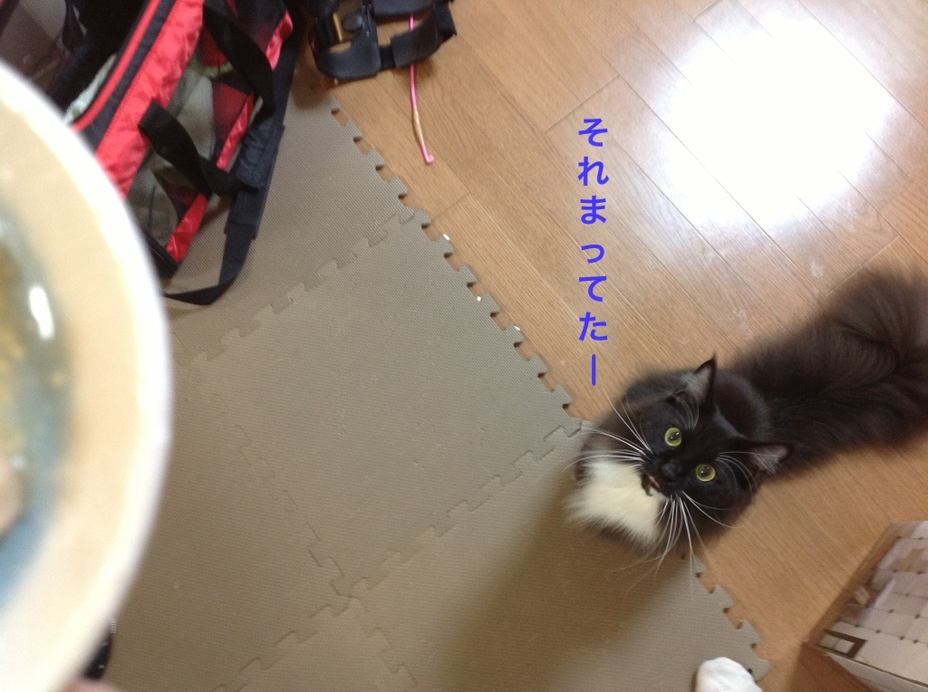 image_20121130202519.jpg