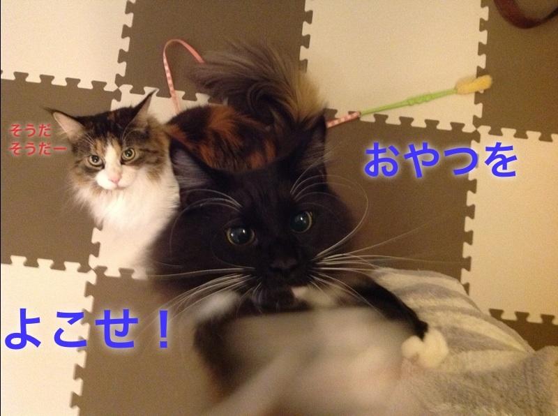image_20130104233735.jpg