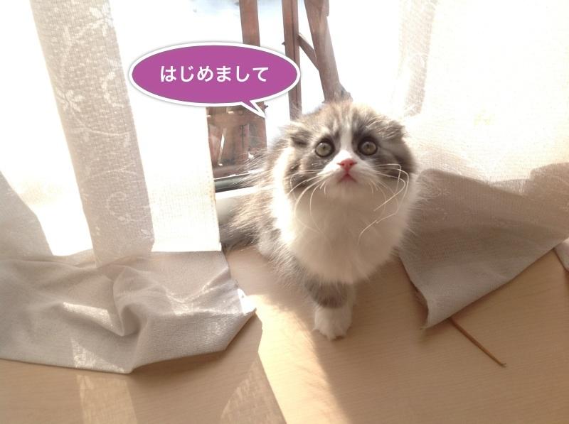 image_20130111165941.jpg