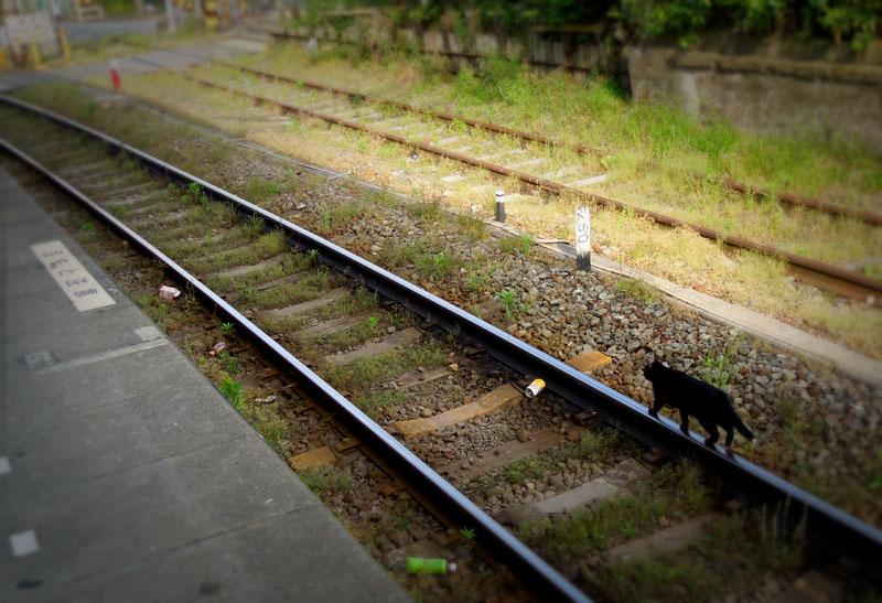 120519S線路と黒猫3