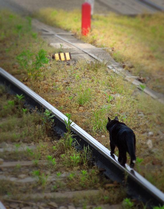 120519S線路と黒猫2