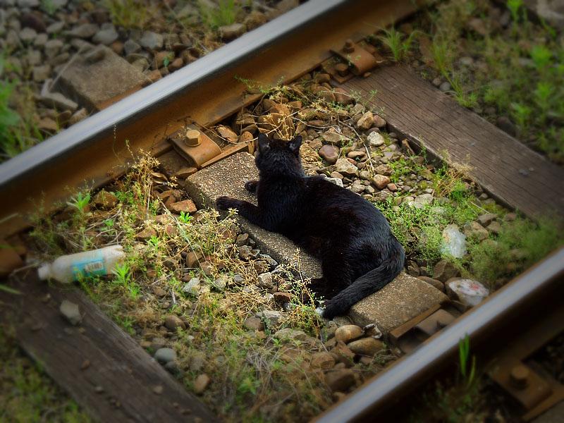120519S線路と黒猫1