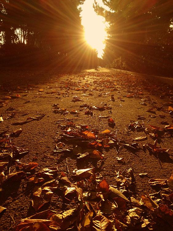 121118木更津落ち葉の散歩道