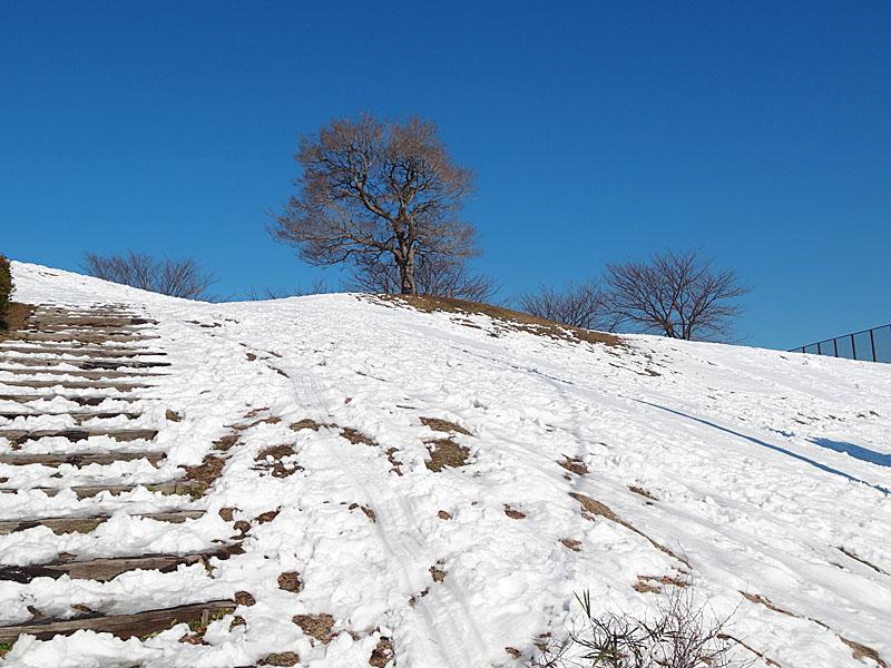 130115雪の榎の丘4