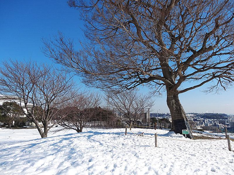 130115雪の榎の丘3