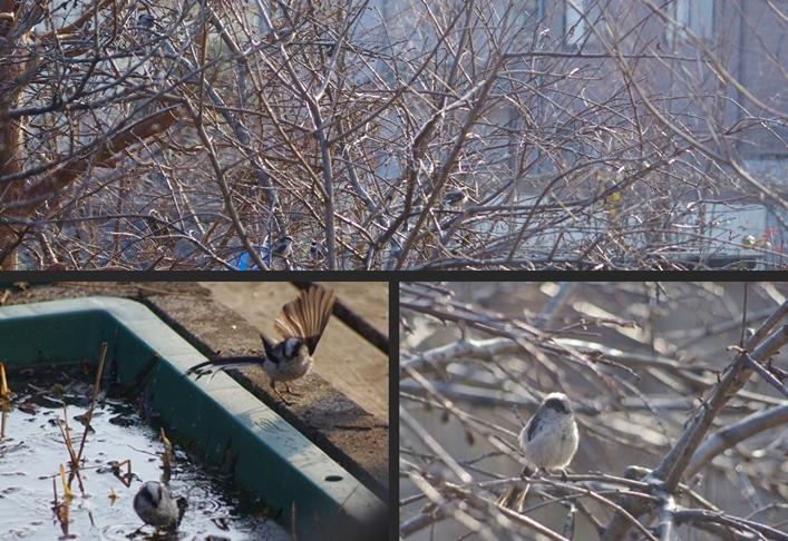 2014-01-22 2014-01-22 005 023-vert