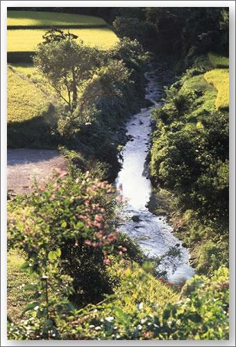 明日香 稲淵の小川