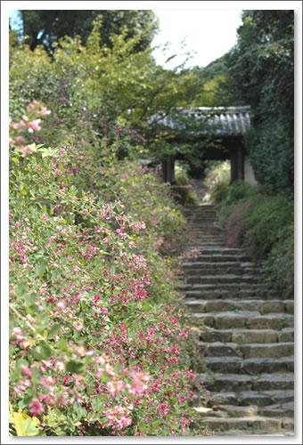 白毫寺(びゃくごうじ)の萩