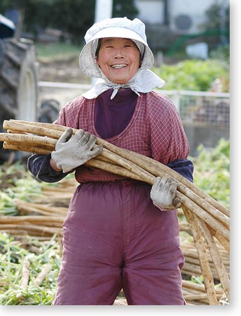 扶桑町守口大根の収穫作業