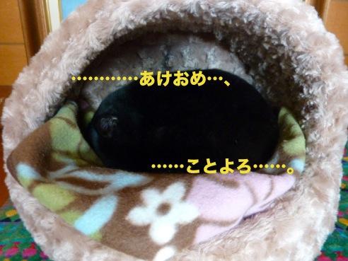 P1070474.jpg