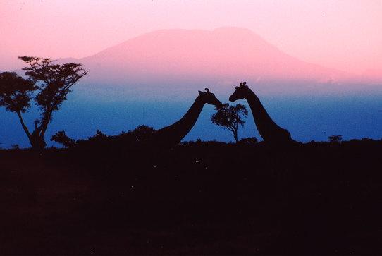 a-giraff-kili[1]