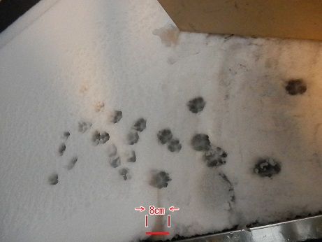 雪 ! ! 雪 ♡ 雪~~~☆
