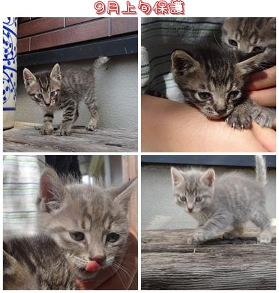 cats_20121006225819.jpg