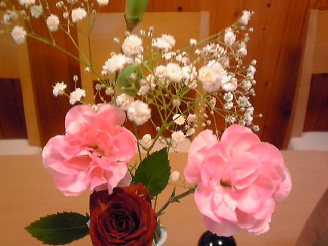 バラとかすみ草、5,25、KC3T0135