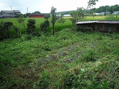 yosakoi,畑のアフター、P1030440