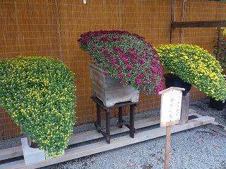 10,27,伊賀上野、菊花展、P1030792