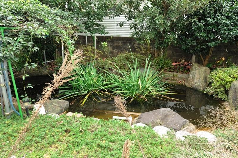 フル状態の池