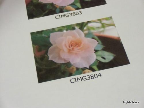 CIMG3920-001.jpg
