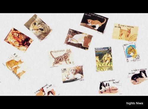 kitte3.jpg