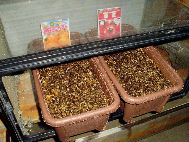 トマトの種蒔3月23日